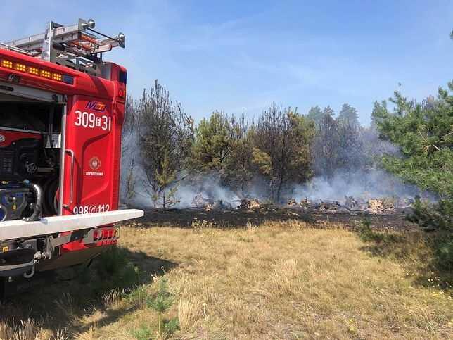 Gorzów Wielkopolski. Pożar lasów koło Marwic i Santocka. W akcji pięć samolotów gaśniczych