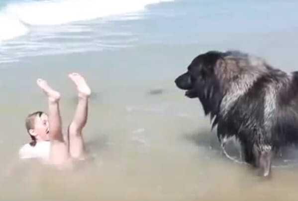 Pies-bohater uratował topiącą się dziewczynkę. Gdyby nie on, straciłaby życie