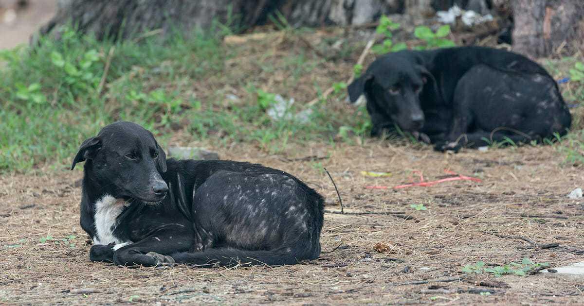 Cztery bezdomne psy obwołane bohaterami po tym, jak ochraniały porzucone w krzakach dziecko