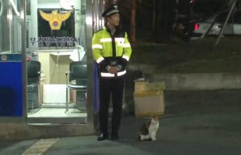 Bezdomna kotka przyszła na posterunek policji. Funkcjonariusze zareagowali natychmiast