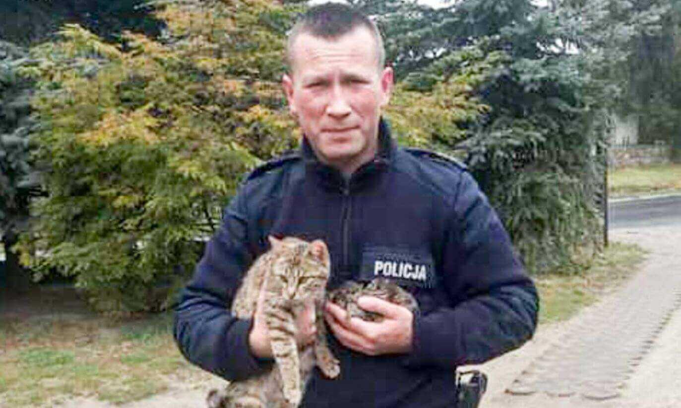 W śmietniku znaleziono 5 małych kotków w foliowym worku. Kiedy je wyciągnęli poznali bolesną prawdę