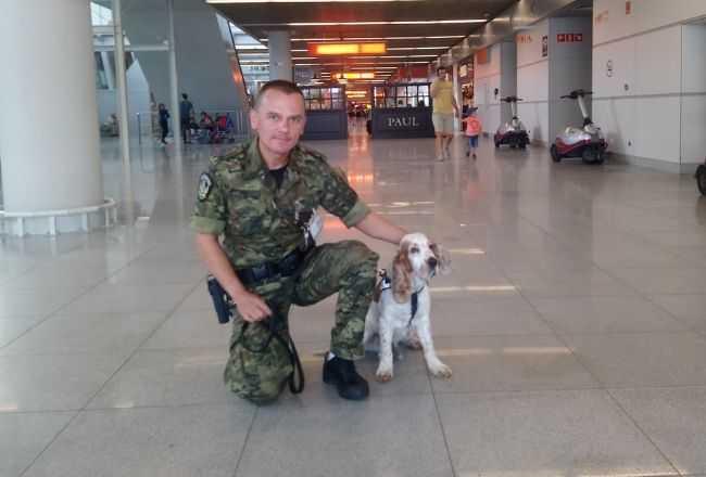 Pies Maks od 8 lat dba o nasze bezpieczeństwo na Lotnisku Chopina. Powinien dostać emeryturę