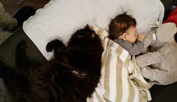 Kotka nie opuszczała ciężarnej właścicielki na krok. Czuwała przy niej przez 9 miesięcy