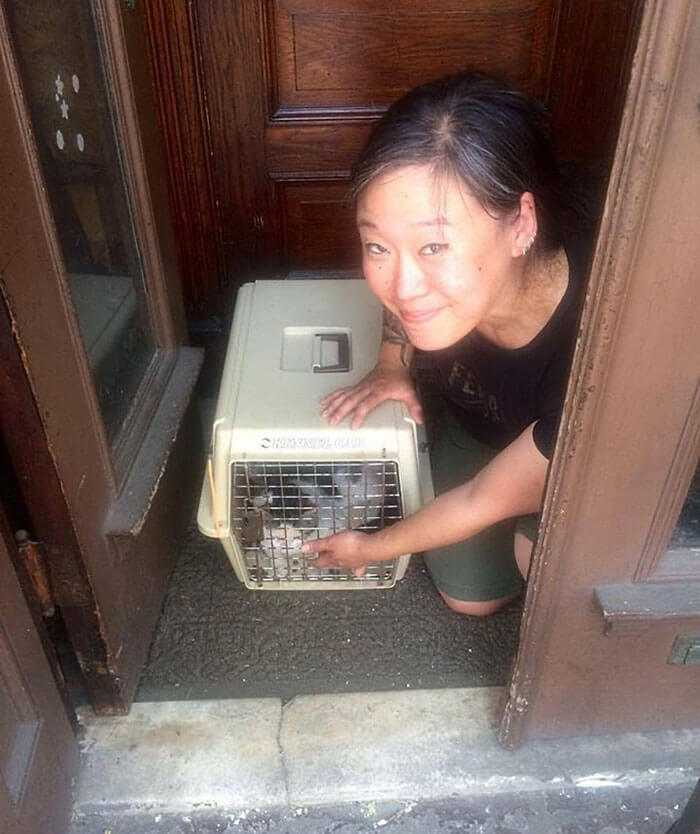 Kot został wyrzucony na ulicę razem z meblami. Przeraźliwe płakał