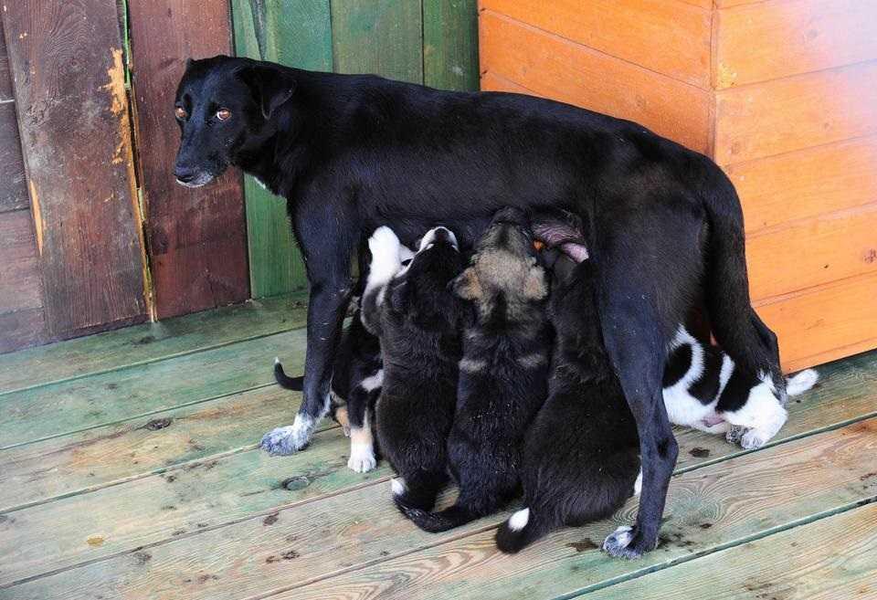 Te szczeniaczki szukają domu
