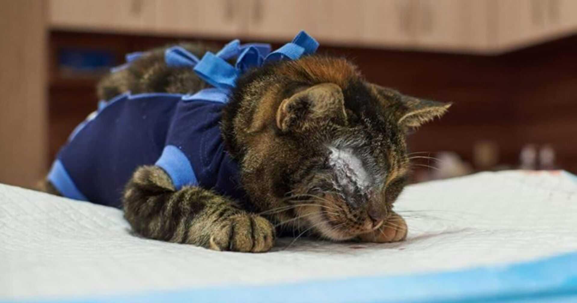 To, przez co przeszła ta kotka przyprawia o gęsią skórkę: 6 lat tułaczki i śrut w ciele