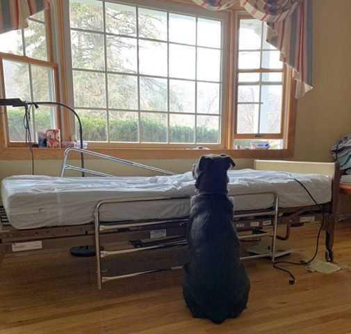 Pies cały czas czekał przy pustym łóżku szpitalnym. Jego właściciel zmarł kilka dni wcześniej