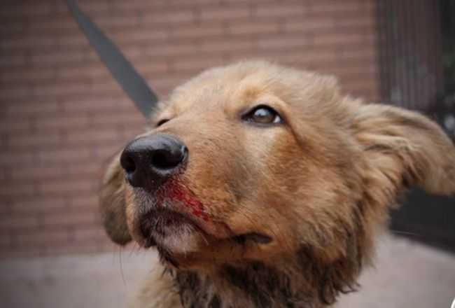 """Matka wraz z córką chciały zabić psa. Skakały po nim bo """"miały ciężką sytuację rodzinną"""""""