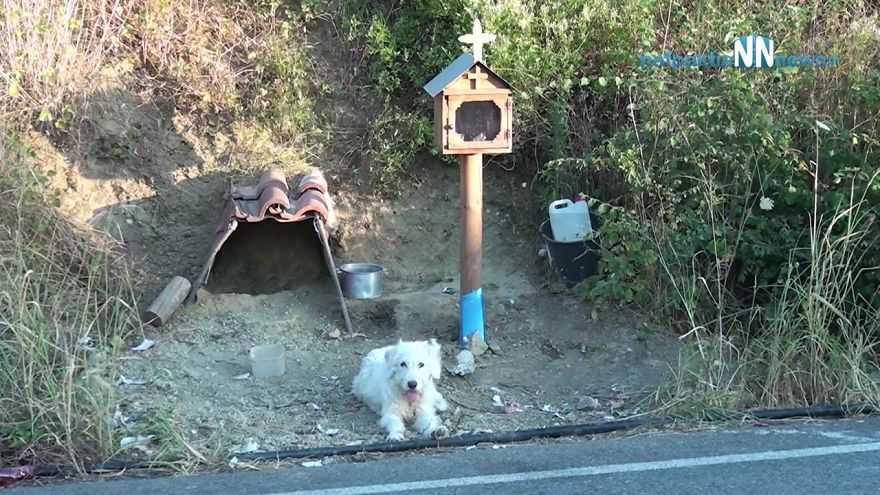 Pies przez prawie dwa lata nie ruszył się z miejsca, w którym zginął jego pan. Miejscowi zbudowali mu tam domek