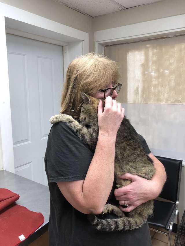 Kobieta po 11 latach odnalazła swojego kota. Gdy zobaczył swoją właścicielkę zareagował od razu