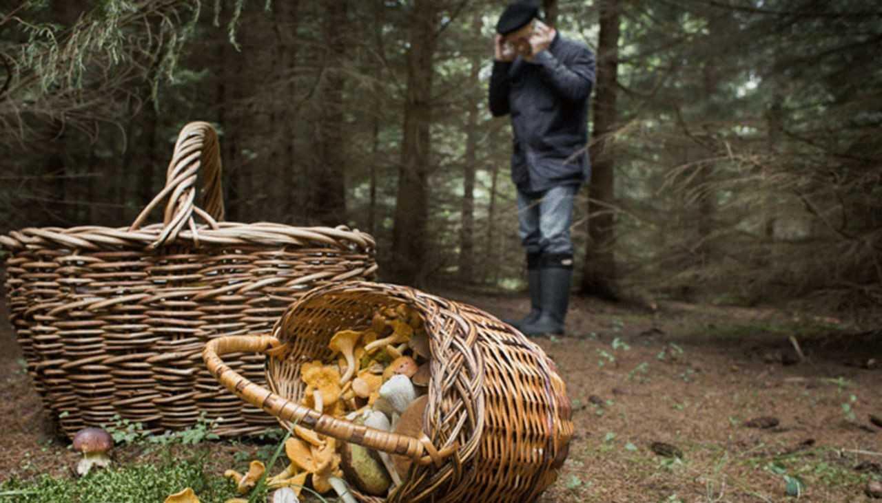 Niebezpieczne wyprawy na grzyby. Giną ludzie
