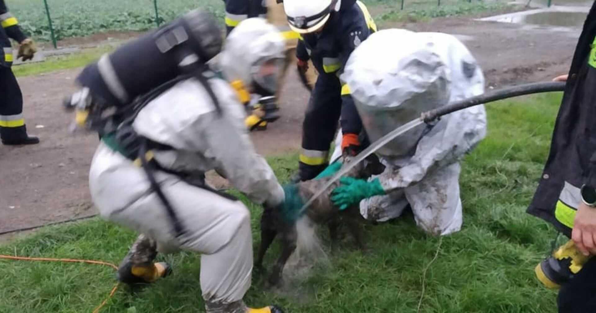 Sukces bydgoskich strażaków. Uratowanie tego psa graniczyło z cudem