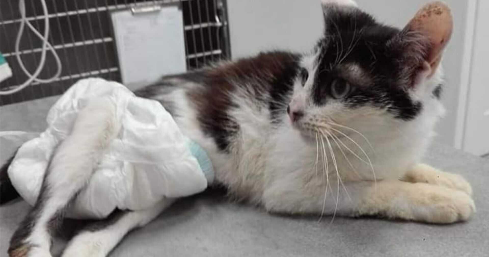 Bestialsko postrzelona kotka wygrała walkę o życie. Teraz prosi o pomoc