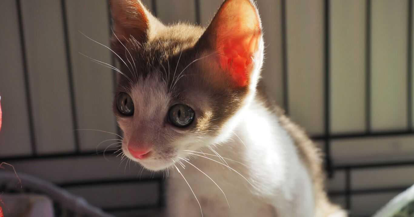 Weterynarz nie daje sparaliżowanej kotce szans. Mimo to, opiekunka ratuje ją popularnym produktem dla dzieci