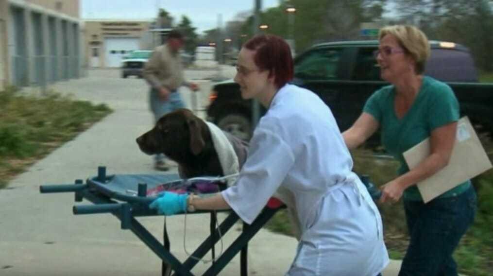 Pies znika bez śladu: 27 dni później, inny pies tych samych właścicieli zaczyna się dziwnie zachowywać