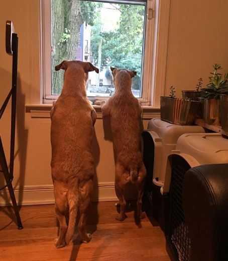 Suczka zobaczyła na ulicy identycznego psa jak ona. Wręcz błagała właścicielkę, by wrócił z nimi do domu