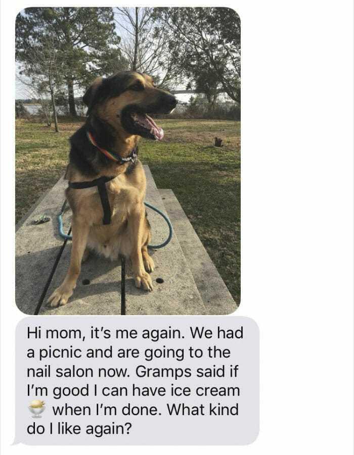 Córka pozwala ojcu zaopiekować się psem przez weekend – dostaje od niego wiadomości, które nie przyszłyby ci do głowy