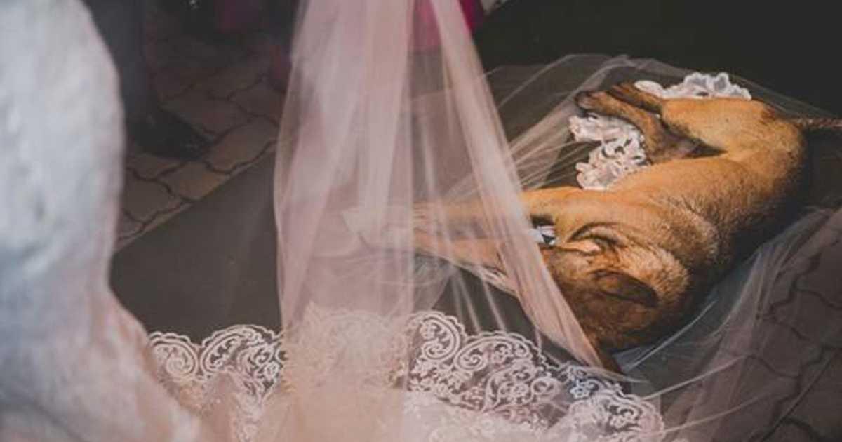 Bezdomny pies pojawia się na ślubie i na zawsze zmienia życie państwa młodych