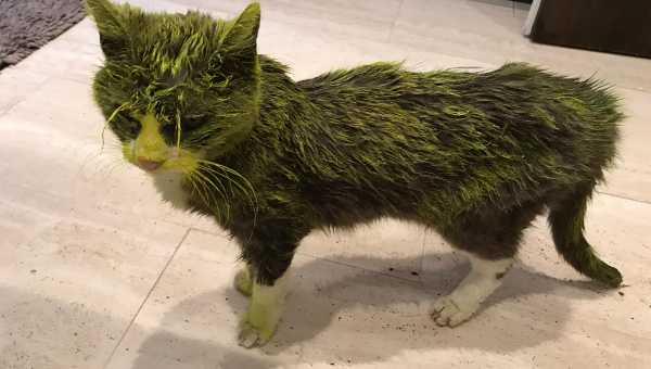 Załamana właścicielka opisuje jak nieznani sprawcy oblali jej kotkę farbą, niestety zwierzę nie przeżyło tego ataku