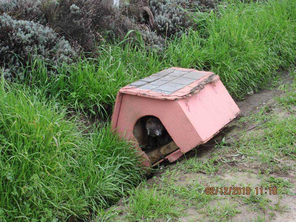 Ktoś wyrzucił przy drodze psa razem z budą. Gdy podeszli do budy zobaczyli coś co ich zszokowało.