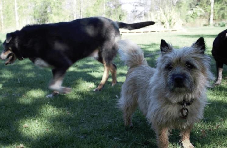 Właściciele zastanawiali się, dlaczego ich pies jest tak wykończony. Gdy znaleźli karteczkę od sąsiada przypiętą do obroży, zażądali wyjaśnień