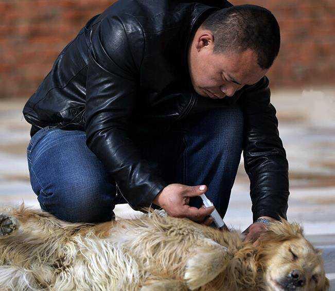 Chiński milioner kupił rzeźnię, aby ratować psy i stworzyć z niej schronisko dla zwierząt