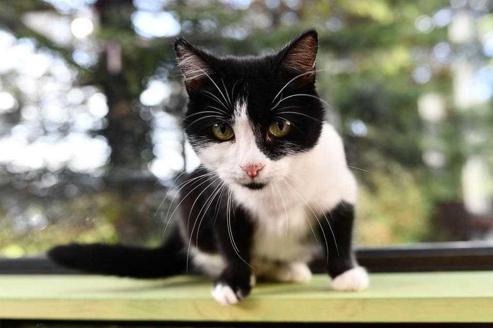 Nie chcę zabawek, wolę pomóc kotom. Wielkie serce 10-letniej Liwii