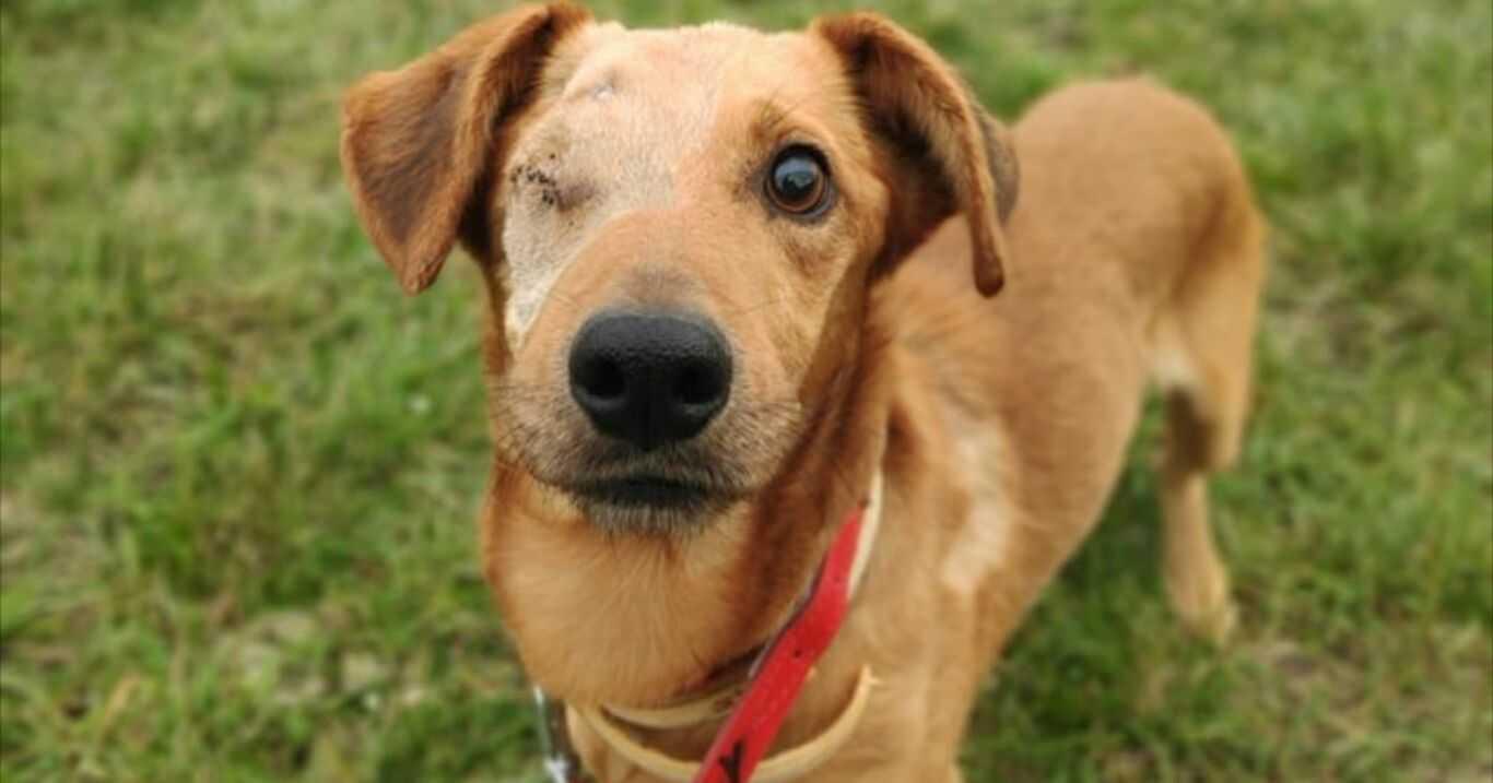 Historia tego psa mrozi krew w żyłach. Na szczęście nie jest jeszcze za późno…