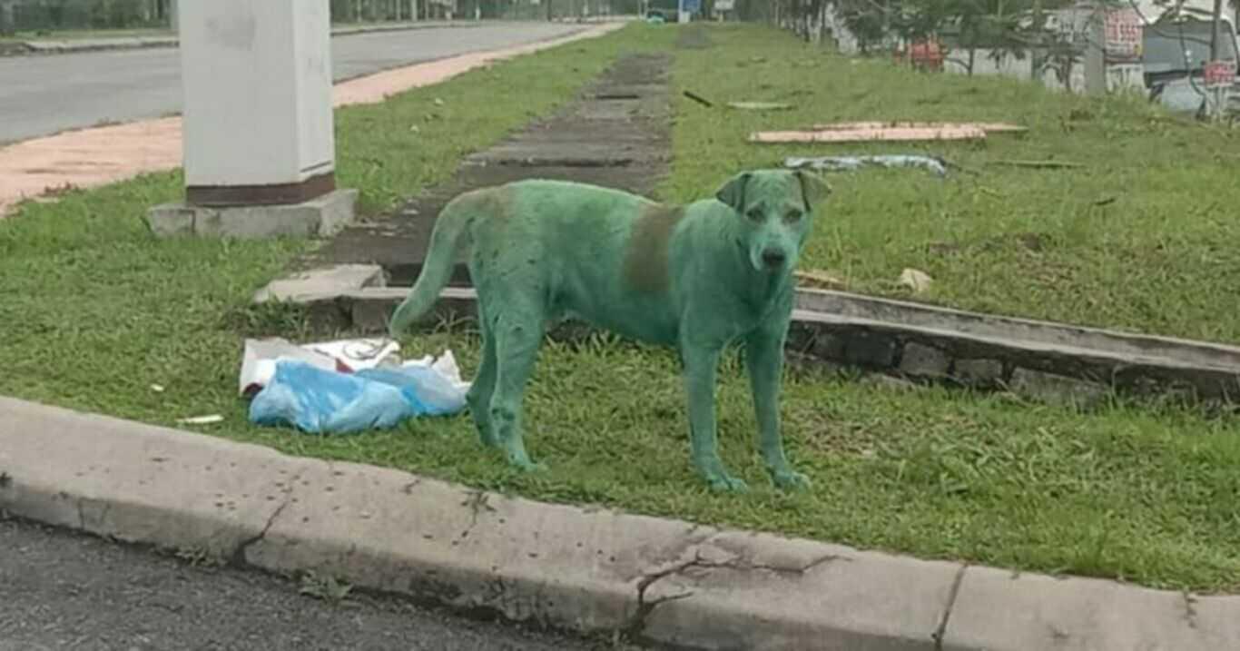 Porzucony, pomalowany na zielono pies na poboczu drogi. Co tu się stało