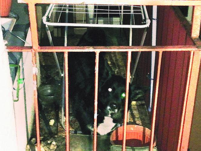 Koszmar BLONDI. Właściciel DRĘCZY psa na balkonie