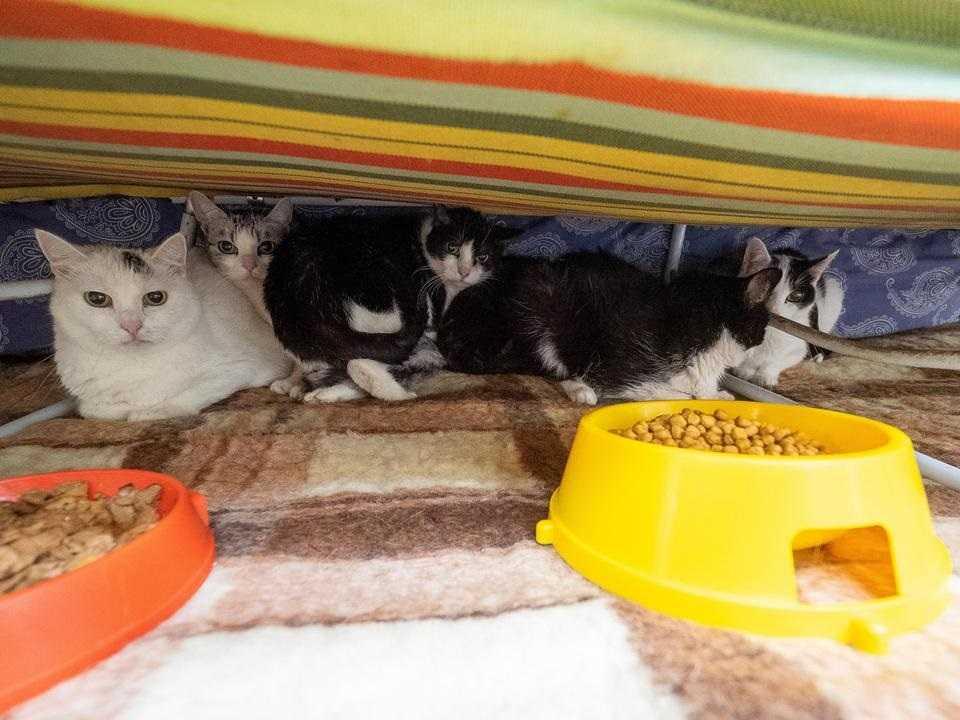 To stało się dzięki Wam! Wszystkie koty pani Krysi mają nowe domy