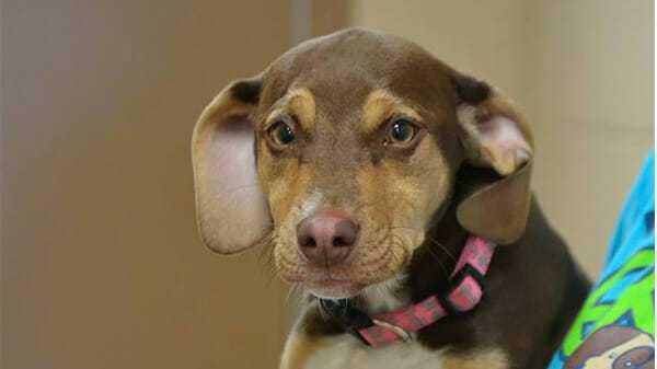 Pies ze schroniska został bohaterem – uratował życie 3-letniej dziewczynce