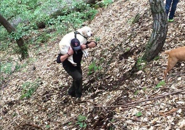 Niewidomy labrador uratowany po tym, jak samotnie spędził tydzień w lesie