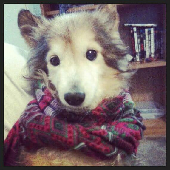 Umierający pies trafia na smutnego mężczyznę – ich spotkanie przeradza się w piękną historię