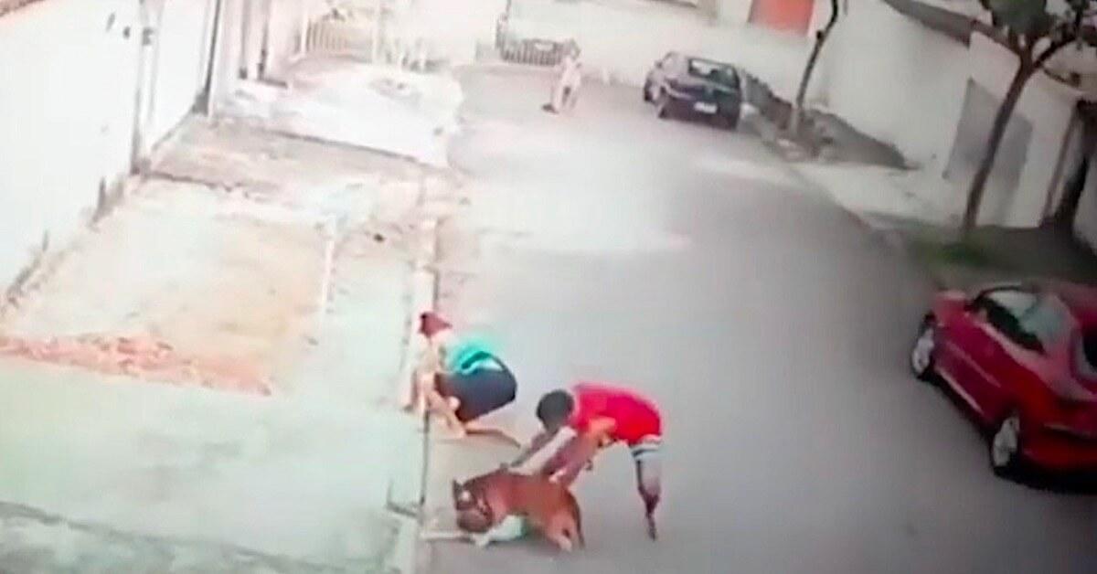 Agresywny pitbull zaatakował chłopczyka. Gdyby nie pomoc 20-latka, zostałby rozszarpany