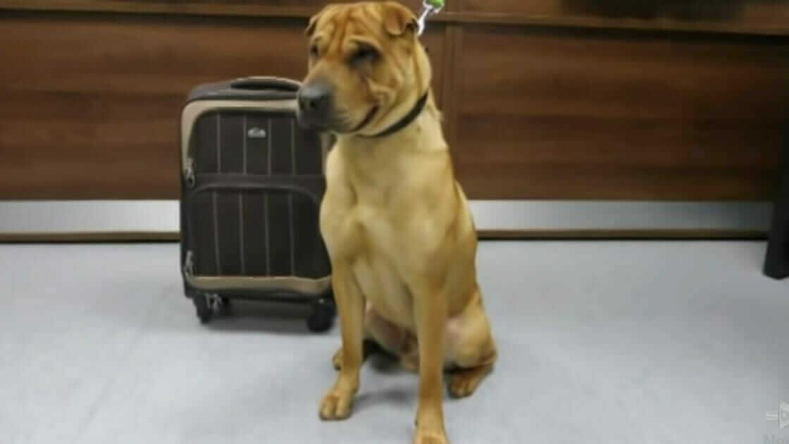 Okrutny właściciel porzucił psa na stacji kolejowej – przywiązał go do walizki pełnej rzeczy należących do psa