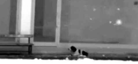 Podszedł do trzęsącego się z zimna psa. Wykonał niesamowicie poruszający gest