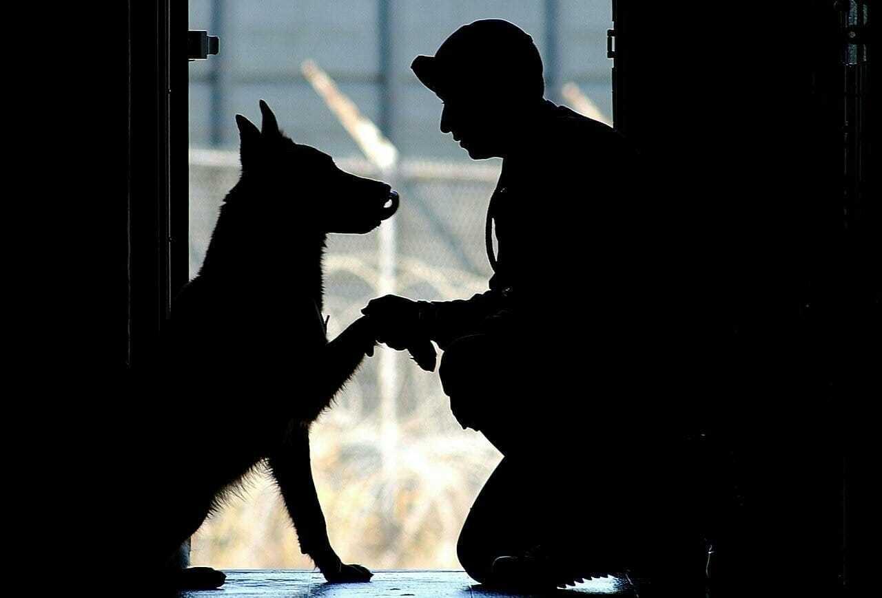 Pies po ośmiu miesiącach rozłąki nie rozpoznaje właściciela – po chwili skacze w jego ramiona
