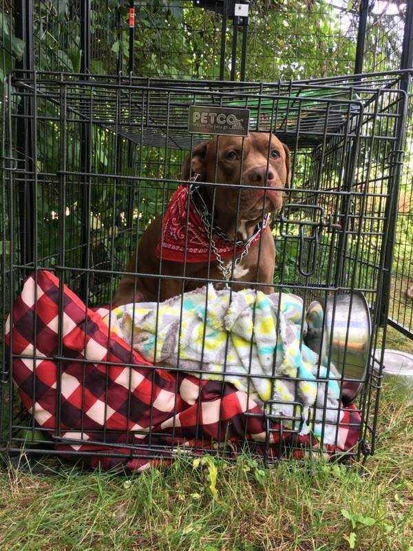 Bezdomna właścicielka musi porzucić swojego pitbulla, wtedy pojawiają się ludzie, którzy pomagają im obojgu