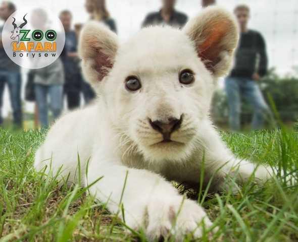 Dramat polskiego zoo. Przez epidemię kończą się pieniądze na utrzymanie zwierząt