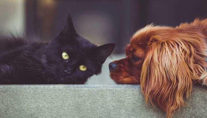 Już wiadomo, czy psy i koty przenoszą koronawirusa