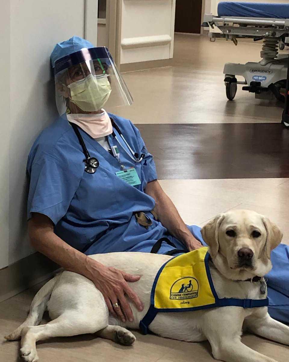 USA: psi terapeuta pomaga lekarzom, którzy walczą z koronawirusem