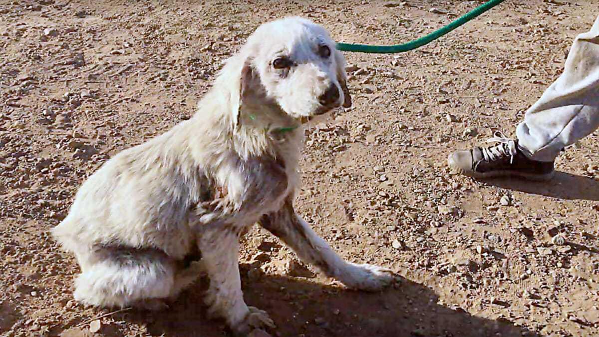 Właściciel psa zaniedbał go i trzy razy próbował zabić