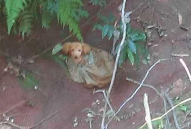 Pojechali do lasu, żeby wyrzucić psa. Włożyli go do reklamówki i zostawili