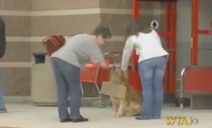 Pies siedzi samotnie przed sklepem – gdy ludzie przyjrzeli się bliżej kartce przywieszonej do jego szyi, odczytali tylko 9 słów