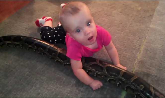 Tata broni decyzji o pozwoleniu małej córce na zabawę z pytonem