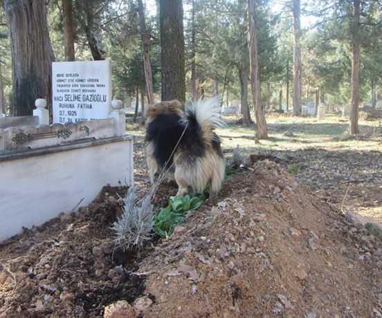 Pies podczas pogrzebu nie chciał odejść od trumny swojego pana. Po ceremonii zrobił rzecz, która powaliła wszystkich na kolana