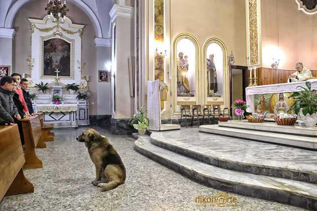 Ten pies chodził codziennie do kościoła, gdy dowiesz się dlaczego wzruszysz się do łez
