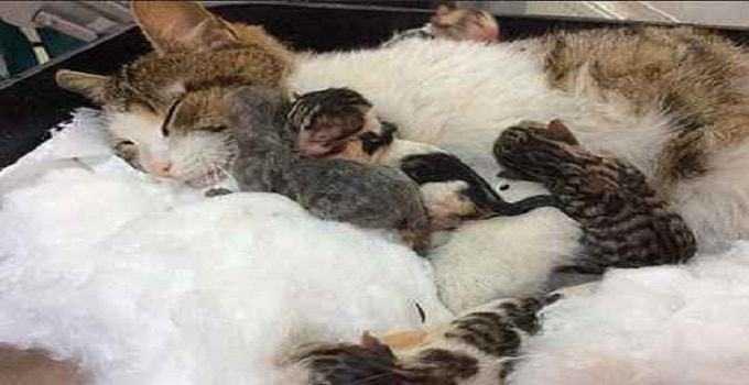 Kotka prosiła o pomoc miaucząc przed szpitalem. Miała wyjątkowy powód...