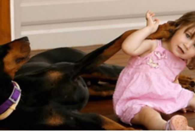 Adoptowali dobermana. Po 4 dniach zaczął warczeć na ich 1,5 roczną córkę. Prawdziwy powód odebrał im mowę
